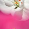 Flower in the pink mist