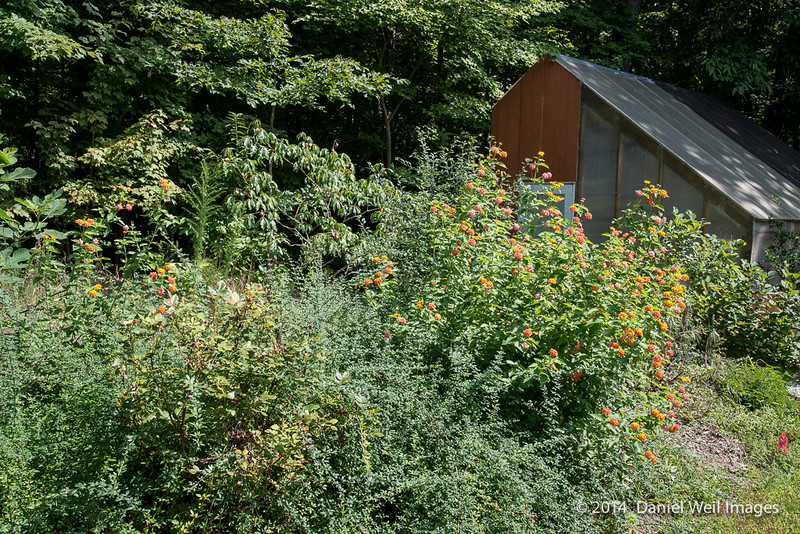 Nick Plummer's Garden and Greenhouse