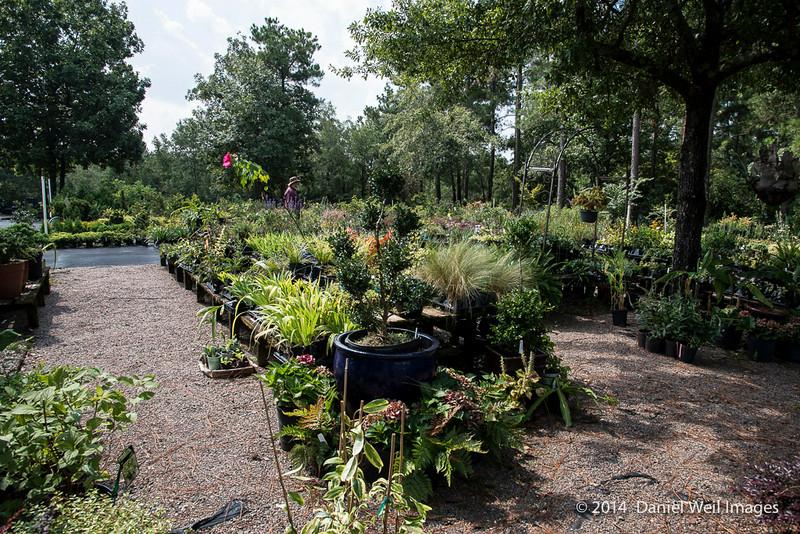 Nurseries Caroliniana in North Augusta, North Carolina, a fantastic nursery