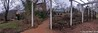 Panorama of courtyard and front of house, very distorted
