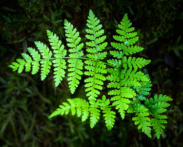The New Fern