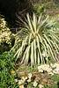 Yucca Margaritaville
