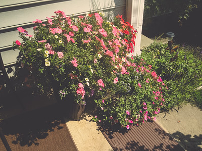 iPad mini photo | 2013 Condo Garden | Manassas, Virginia