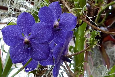 Flower-3979