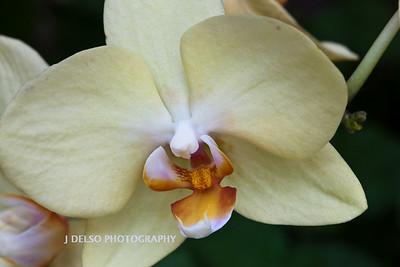 Flower-3783