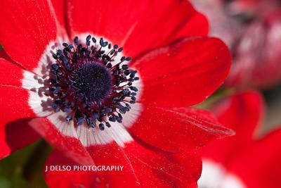 Flower-3918