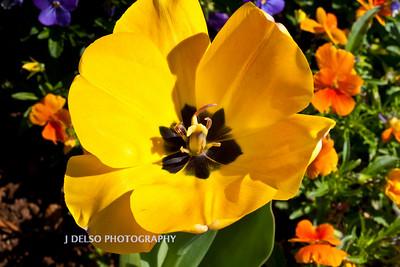 Flower-3899