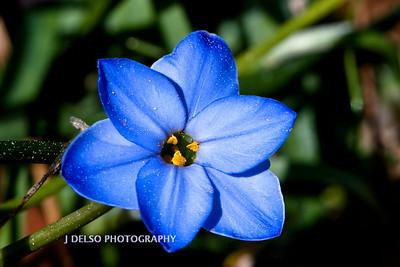 Flower-3845
