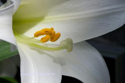 Flower-3898