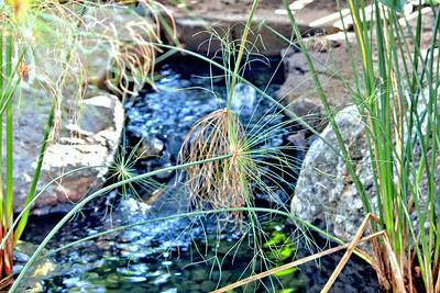 Klehm Arboretum Grass