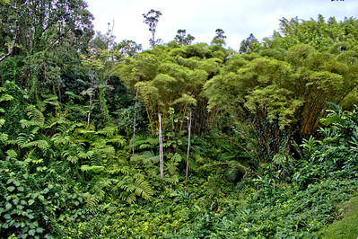 Lush vegetation