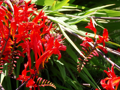 Random Flora