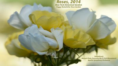Roses-2014 at NYBG