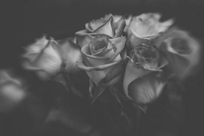 Roses | 2011