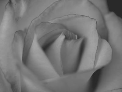 Roses | March 2010