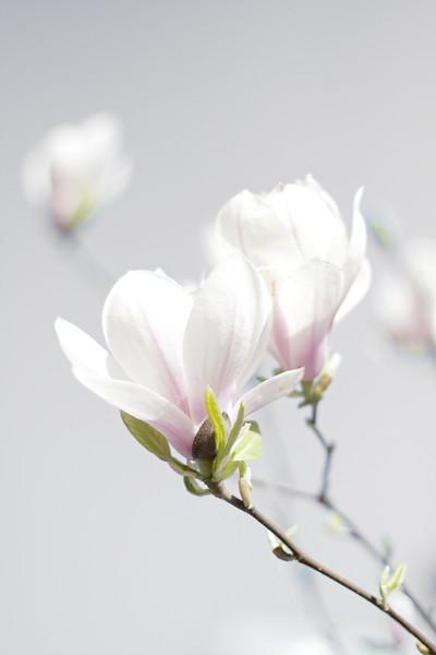BT Sakura Nr.