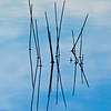 Reeds reflecting in Vermillion Lake