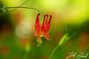 Spring Flowers - May182015_8243 - Schoepfle Garden - Birmingham, Ohio