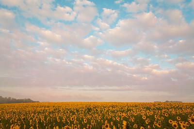 Sunrise at Clear Meadow Farm | Monkton, Maryland | September 2014