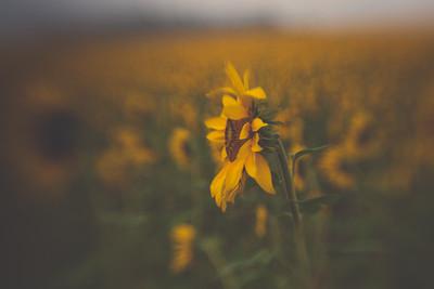 Sunrise at Clear Meadow Farm   Monkton, Maryland   September 2014