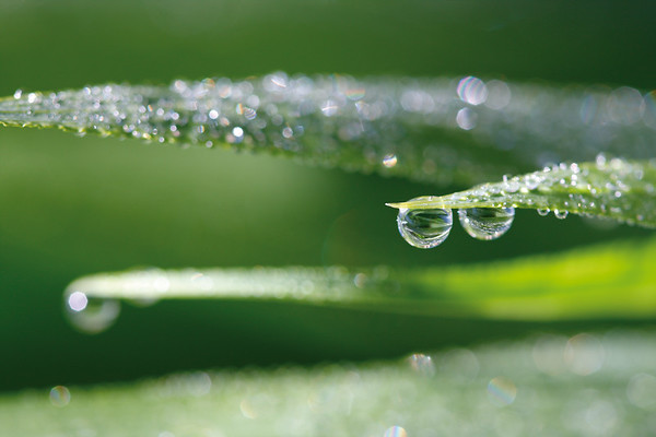 6144x4096, waterdrops, leaves, green, grass