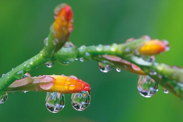 6144x4096, waterdrops, leaves, green, grass, flower