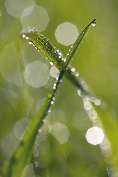 4096x6144, gras, waterdrops, green