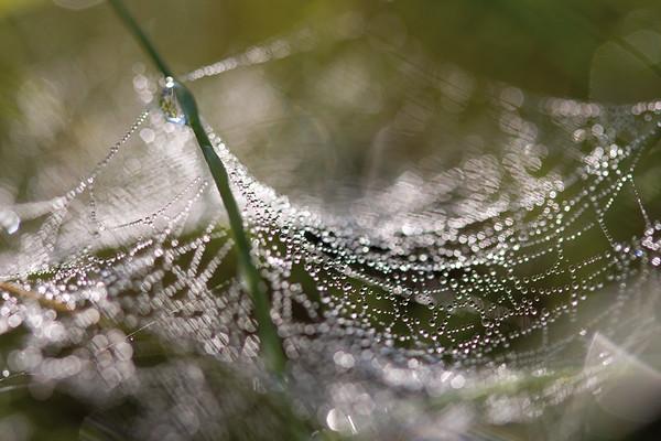 6144x4096, gras, waterdrops, green, field, spider web