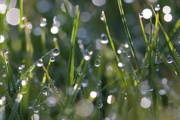 6144x4096, gras, waterdrops, green, field