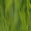 gras / grass