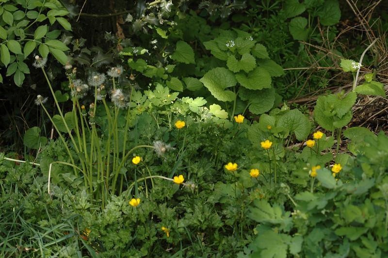 Een ruig hoekje in de tuin