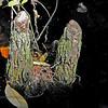 Cypress Knees; Okefenokee Swamp