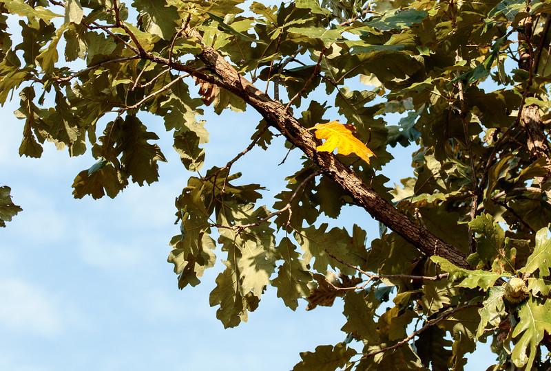 IMAGE: https://photos.smugmug.com/Flora/Trees/i-sSmCNhG/0/3f38a37a/L/IMD_6236-L.jpg