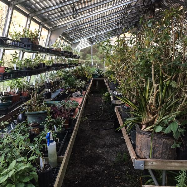Greenhouse at Montrose