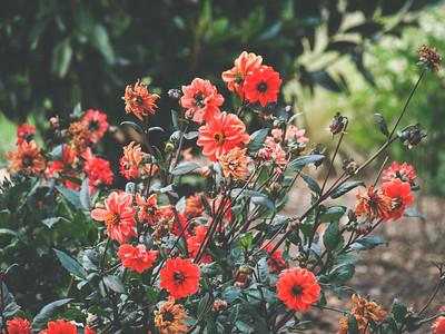 JC Raulston Arboretum | Raleigh, North Carolina