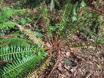 Washington State Plants