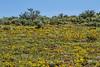 Quilomene Wildlife Area, April, 2016