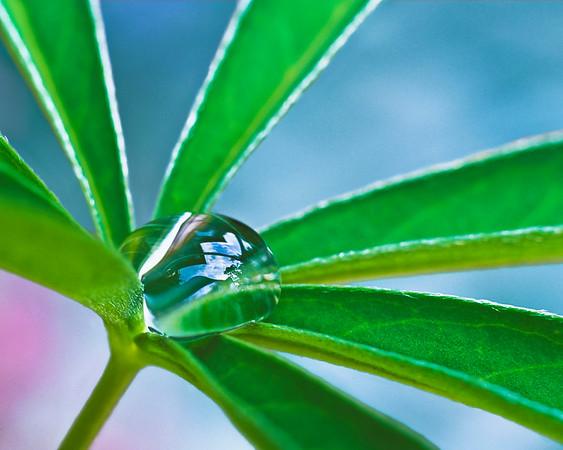 BT  Water Drops Nr.:  fim8144