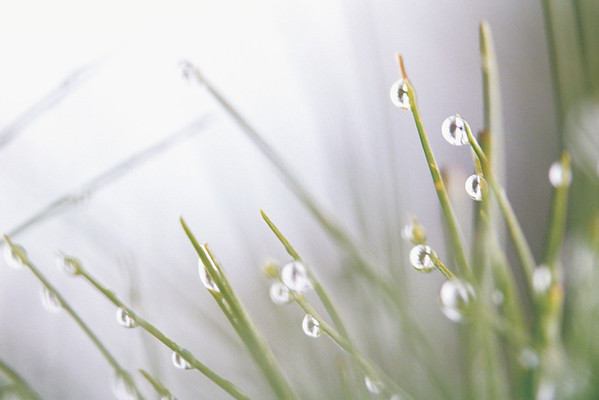 BT  Water Drops Nr.:  42-15569958