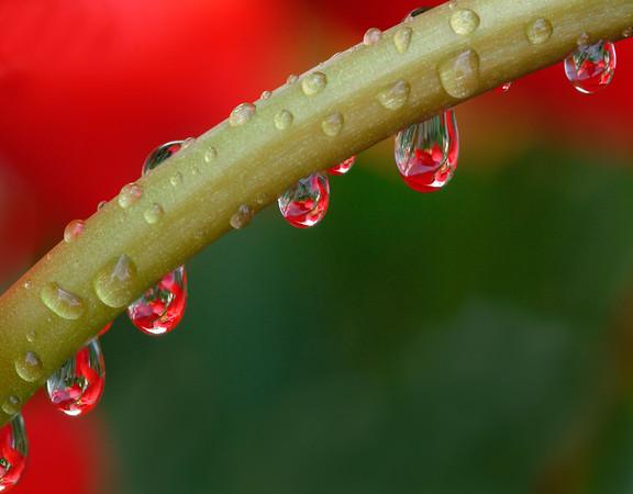 BT  Water Drops Nr.:  42-16512402