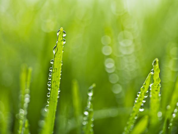 BT  Water Drops Nr.:  42-49941276