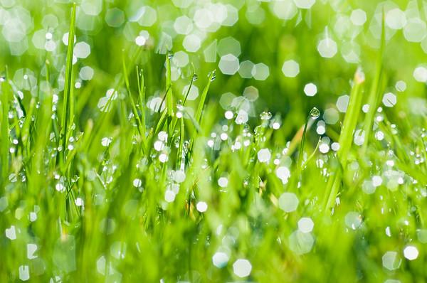 BT  Water Drops Nr.:  42-26823253