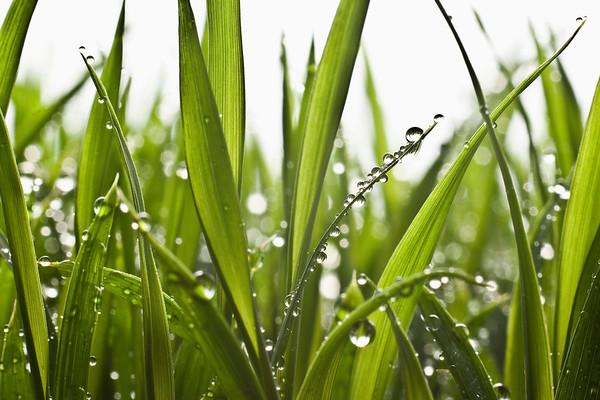 BT  Water Drops Nr.:  42-27090648