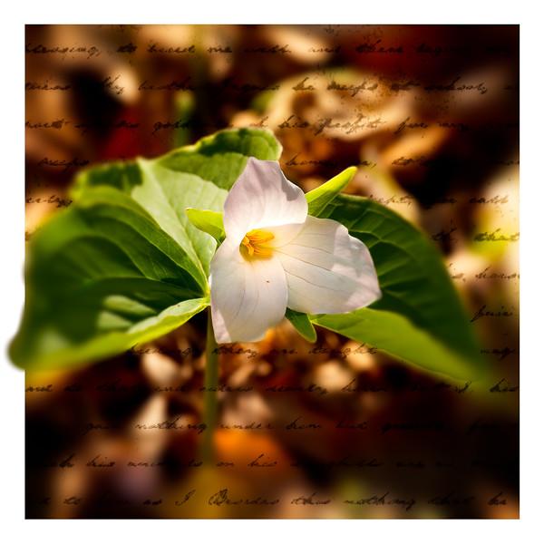 Wild Flower#2-153.jpg