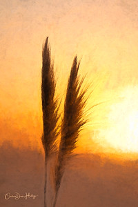 Sunset Plumes