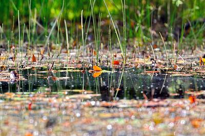 Sole Common Pond