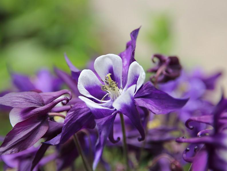 Day 536 - Purple Prose