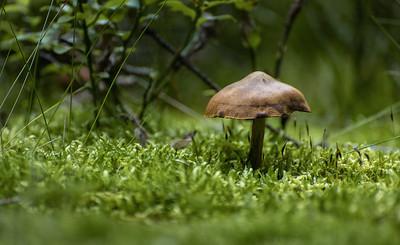 Found in forest