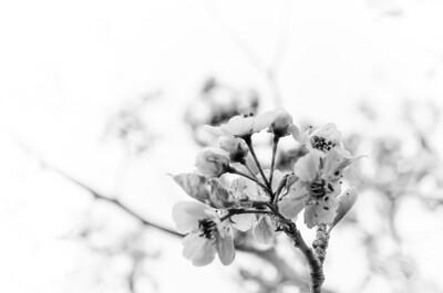 Bloom into Leaf III