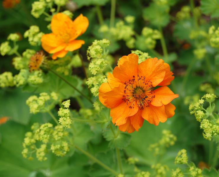 Orange Flowers on Green